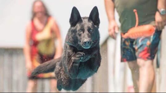 Dejuco est un élevage professionnel de Bergers Allemands lignée 100%. Nos chiens proviennent des meilleures lignées de la République Tchèque et de l'Allemagne.